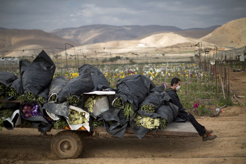 A Thai worker sits in a back of a truck load with flowers in the fields of the west bank Jordan Valley Jewish settlement of Petsael, Thursday, Jan. 9, 2014. For Israeli farmers in the West Bank's Jordan Valley, an international campaign to boycott settlement products has turned almost overnight from a distant nuisance into a harsh economic reality. The export-driven income of growers in the valley's 21 settlements dropped by 15 percent, or $29 million dollars, last year because Western European supermarket chains trying to avoid political entanglements largely stopped buying the valley's grapes, dates and sweet peppers. (AP Photo/Oded Balilty)