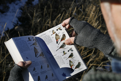 Scott Sommerdorf  |  The Salt Lake Tribune              Duane Smith looks through his copy of Sibley's Bird Guide to identify a species of Sparrow he spotted during the 112th annual Audubon Christmas Bird Count. Counts are being held across the state, Saturday, December 17, 2011.