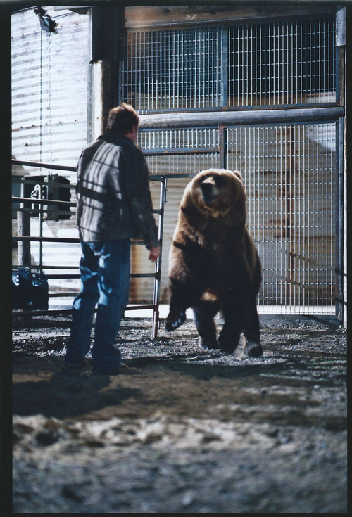 "Courtesy photo  Bart the Bear appears with Robert Redford in a scene from ""An Unfinished Life."""