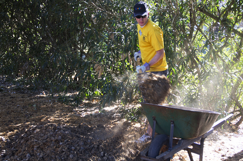 Two Mormon missionaries in the San Jose, Calif. mission -- Elder Whitehead in yellow hat from Cedar Hills, Utah and Elder Pehrson in green from Rapid City, SD -- help out in an orchard. Courtesy Elizabeth Fuchs