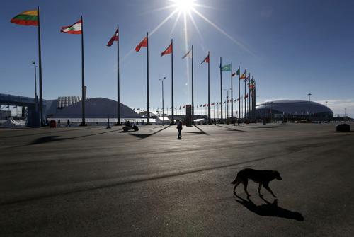 A stray dog wanders through Olympic Park ahead of the 2014 Winter Olympics, Thursday, Feb. 6, 2014, in Sochi, Russia. (AP Photo/Robert F. Bukaty)