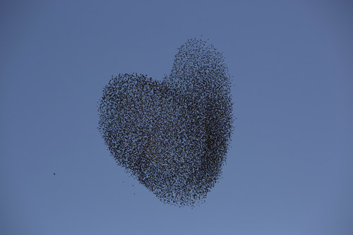 A flock of migrating starlings flies over the southern Israeli village of Tidhar, Wednesday, Feb. 12, 2014. (AP Photo/Oded Balilty)