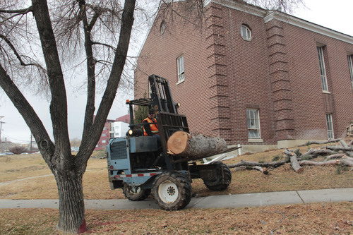 Five 30-foot pine trees outside the building were cut into logs were transported -- using donations from Affordable Tree Care and Tramcor Corp. -- and given to the Navajo tribe in San Juan County, where members will use them.  Courtesy photo