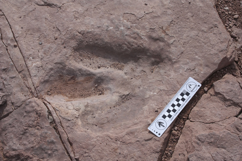 | Courtesy BLM Paleontologists are asking for the public's help in finding a dinosaur footprint that was stolen near Moab on Feb. 17 or 18. The print is about 1 foot by 2 to 3 feet and was left by a three-toed meat eating dinosaur -- likely an ancestor of the Utah state dinosaur, Allosaurus, experts said.