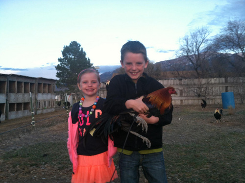 | Courtesy Jamen White Jamen White raises game fowl in Richfield and does not support a proposal to increase penalties for cock fighting. Whites children, pictured here, are the fifth generation of his family to raise game fowl.