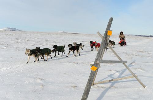 Iditarod musher Jeff King, from Denali, Alaska, mushes between the checkpoints of White Mountain and Safety, the last checkpoint before the finish line in Nome. King was the first musher to leave the White Mountain checkpoint during the 2014 Iditarod Trail Sled Dog Race on Monday, March 10, 2014. (AP Photo/The Anchorage Daily News, Bob Hallinen)
