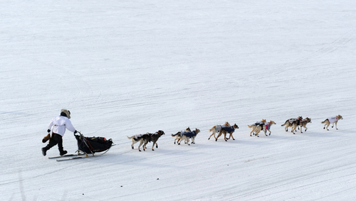 Iditarod musher Aliy Zirkle, from Two Rivers, Alaska, leaves in 2nd place from the White Mountain checkpoint during the 2014 Iditarod Trail Sled Dog Race on Monday, March 10, 2014. (AP Photo/The Anchorage Daily News, Bob Hallinen)