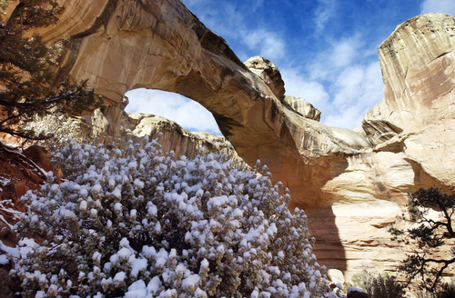 Danny Chan La | Tribune File Hickman Arch at Capitol Reef with snow cover in 2003. A National Park Service report shows Utah's efforts to open nine units during the federal government shutdown paid off with visitors spending $10 for every $1 the state spent for the opening.