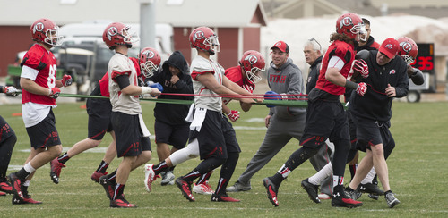 Steve Griffin  |  The Salt Lake Tribune   Players hold back runners with stretch bands during spring practice on the University of Utah campus in Salt Lake City, Utah Tuesday, March 18, 2014.