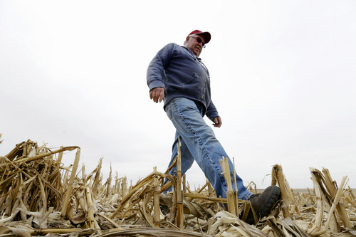 "In this March 17, 2014 photo Tom Rutjens walks through corn field in Tilden, Neb. Rutjens, a construction-company owner who also lives in Tilden, said he knew of two landowners who were dead-set against the pipeline, but more who were willing accept the risks in exchange for the payments. ""Just about everyone else I've talked to has been tickled"" with the offers, Rutjens said. (AP Photo/Nati Harnik)"
