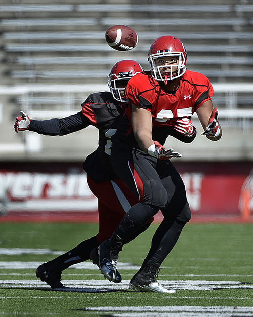 Scott Sommerdorf   |  The Salt Lake Tribune Utah Sophomore TE Siale Fakailotonga looks to make a catch during Utah football practice at Rice Eccles Stadium, Saturday, March 22, 2014.