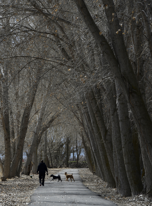 Franciso Kjolseth  |  The Salt Lake Tribune A pedestrian walks his dogs along the Provo Canyon Parkway near where the U.S. Interior Department proposes restoring the Provo River delta by acquiring 310 acres of agricultural and marsh lands where the river meets Utah Lake. The plans calls for diverting much of the rivers flow over it, recreating a lost wetland ecosystem that would provide habitat crucial to the recovery of endangered June sucker. Additional trails are being planned that would follow the new river path.