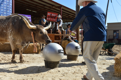 In this photo provided by Allstate Insurance, Dick Vitale and Joel, the longhorn, go head-to-head in an NCAA tournament bracket pick 'em contest at the Stockyards in Fort Worth, Texas on March 18, 2014. (AP Photo/Allstate Insurance, Cooper Neill)