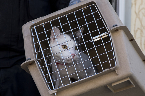 Airlines are required to allow passengers to bring emotional support animals aboard with them at no charge. Some question whether pet owners and companies providing certificates are abusing the system. (AP Photo/Matt Rourke)