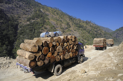 In this Jan. 23, 2011 photo released by Fauna & Flora International Tuesday, April 1, 2014 for editorial use, trucks transport illegally logged timber to China in Sawlaw, northern Kachin State, Myanmar. The British-based conservation group said Tuesday illegal Chinese logging and demand for monkey bones are threatening the Myanmar snub-nosed monkey, a rare monkey species in northern Myanmar. (AP Photo/Jeremy Holden, Fauna & Flora International)