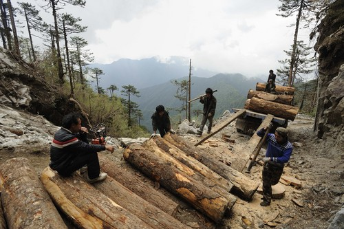 In this May 28, 2011 photo released by Fauna & Flora International Tuesday, April 1, 2014 for editorial use, workers load Illegally logged timber into a truck in Sawlaw, northern Kachin State, Myanmar. The British-based conservation group said Tuesday illegal Chinese logging and demand for monkey bones are threatening the Myanmar snub-nosed monkey, a rare monkey species in northern Myanmar. (AP Photo/Jeremy Holden, Fauna & Flora International)