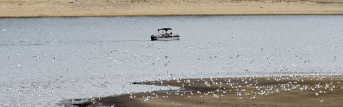 Steve Griffin  |  The Salt Lake Tribune  Low water levels at Rockport Reservoir expose the shore line near Wanship, Utah Friday, April 4, 2014. The Natural Resources Conservation Service issued its Utah Water supply Outlook report, showing that the water situation is better in northern Utah than southern Utah.