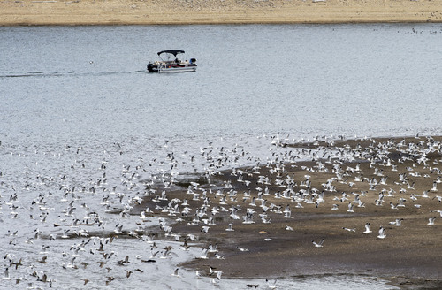 Steve Griffin  |  The Salt Lake Tribune Low water levels at Rockport Reservoir expose the shore line near Wanship on Friday. The Natural Resources Conservation Service issued its Utah Water supply Outlook report, showing that the water situation is better in northern Utah than southern Utah.