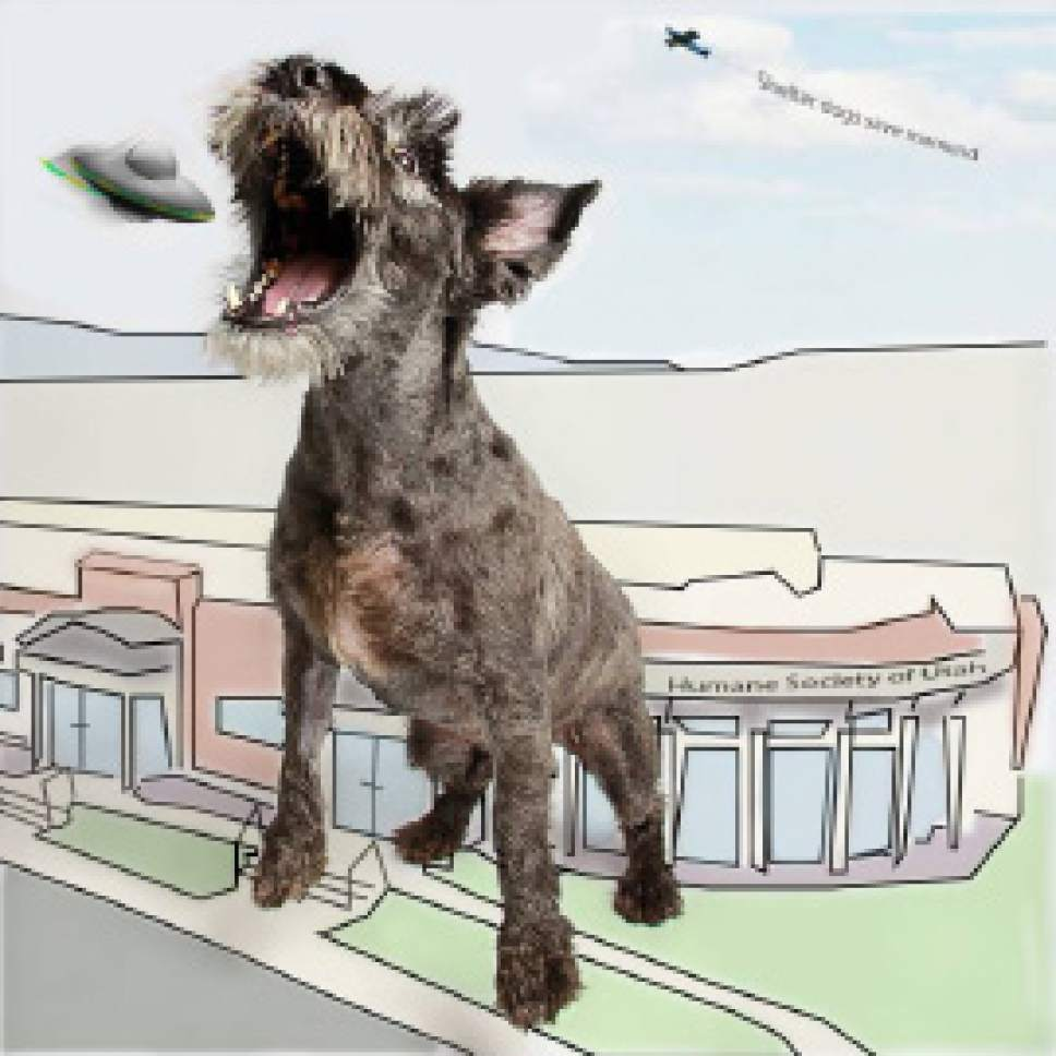 Massive dogs save Salt Lake City from alien invasion - The