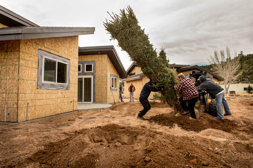 Trent Nelson  |  The Salt Lake Tribune Workers install one of over 1,000 trees being put into a development near the Green River Grill in Dutch John, Friday, March 21, 2014.