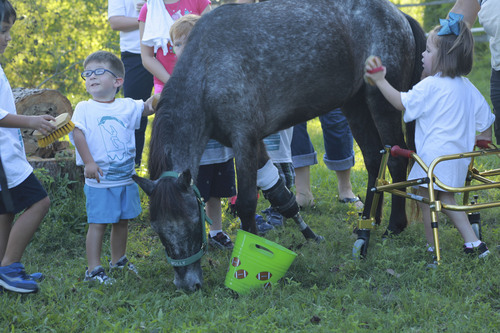 Molly the pony surrounded by children with braces and walkers petting her. Courtesy  |  Lizette Gesuden