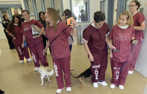 Al Hartmann  |  The Salt Lake Tribune Inmates at the Timpanogos Women's prison in the Pawsitive Program  gather as a group before going outside for a training session with their dogs. They are trainer-handlers in the Pawsitive Program, which teaches select inmates how to train and socialize shelter dogs to become therapy and service animals, often for soldiers with PTSD.