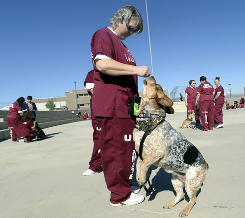 Al Hartmann  |  The Salt Lake Tribune Kerri Brown trains Liberty, a Heeler-Basset hound mix, with positive reinforcement techniques at the Timpanogos Women's prison. They are trainer-handlers in the Pawsitive Program, which teaches select inmates how to train and socialize shelter dogs to become therapy and service animals often for soldiers with PTSD.