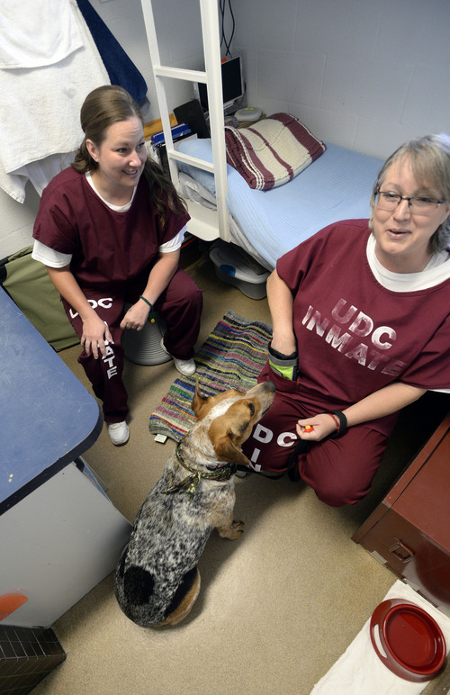 Al Hartmann  |  The Salt Lake Tribune Bobbie Widdison, left, and Kerri Brown share their small cell at the Timpanogos Women's prison with Liberty, a Heeler-Basset hound mix.   They are trainer-handlers in the Pawsitive Program, which teaches select inmates how to train and socialize shelter dogs to become therapy and service animals often for soldiers with PTSD.
