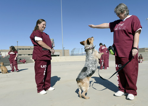 Al Hartmann  |  The Salt Lake Tribune Bobbie Widdison, left, and Kerri Brown train Liberty, a Heeler-Basset hound mix, with positive reinforcement techniques at the Timpanogos Women's prison. They are trainer-handlers in the Pawsitive Program, which teaches select inmates how to train and socialize shelter dogs to become therapy and service animals often for soldiers with PTSD.