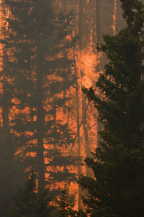 Trees explode into flames in Huntington Canyon on Wednesday, June 27, 2012, as the  Seeley Fire burns  in the Manti-La Sal National Forest. (AP Photo/Paul Fraughton, The Salt Lake Tribune)