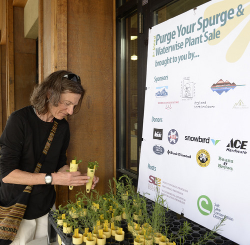 """Rick Egan     The Salt Lake Tribune  Kim Rivard picks out some plants in exchange for the bags of Myrtle Spurge she turned in at REI, during the 8th annual """"Purge Your Spurge"""" event, Saturday, May 3, 2014.  There were also cleanups at Dimple Dell Park and the Bonneville Shoreline Trail at the base of Grandeur Peak."""
