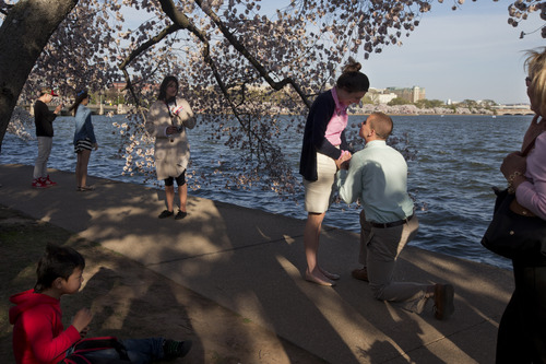 People pause and look as Steven Paska, 26, right, of Arlington, Va., asks his girlfriend of two years Jessica Deegan, 27, to marry him as cherry blossom trees in peak bloom line the tidal basin with the Jefferson Memorial in the background in Washington, Thursday, April 10, 2014. Deegan said yes to the surprise marriage proposal. (AP Photo/Jacquelyn Martin)