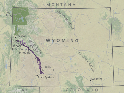 U.S.'s longest mule deer migration discovered in Wyoming   The