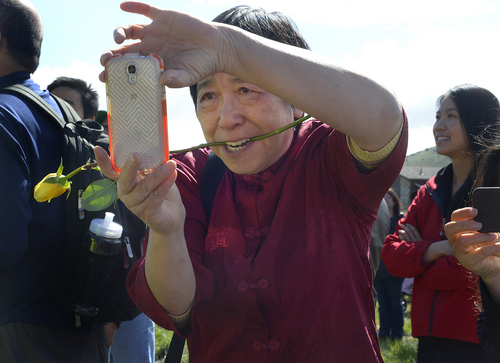 Scott Sommerdorf   |  The Salt Lake Tribune Su Lin Chen makes a photo while holding a rose in her teeth at the Golden Spike re-enactment, Saturday, May 10, 2014. The Chinese community honored Chinese immigrants who built the railroad from the west by taking more than three busloads of people to the Golden Spike National Monument for the 145th commemoration of the completion of the transcontinental railroad.