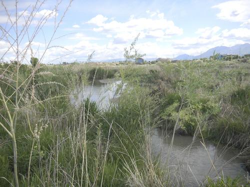 Tom Wharton  |  The Salt Lake Tribune Little Willow Creek provides water for plants, birds and wildlife in South Jordan's Jordan River Migratory Bird Reserve.