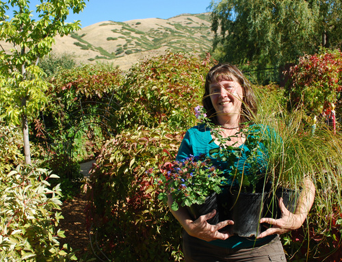 (Tribune file photo)  Marita Tewes-Tyrolt, horticulture director at Red Butte Garden, wonders if the quaking aspen was the best choice to be Utah's new state tree. She favors the white fir.