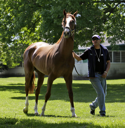 Exercise rider Willie Delgado walks Triple Crown hopeful California Chrome after they arrived at Belmont Park in Elmont, N.Y., Tuesday, May 20, 2014.  The Belmont Stakes is scheduled for June 7.  (AP Photo/Seth Wenig)