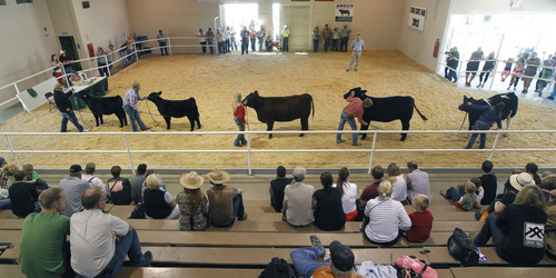 Al Hartmann  |  The Salt Lake Tribune Folks watch the finalists in the Champion Female Overall category Sunday afternoon on the final day of the Utah State Fair.  Legislators are debating what to do with the financially struggling fair.