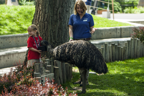 Chris Detrick  |  The Salt Lake Tribune Jackson Elementary student Justice Porter, 6, helps to feed Sydney the emu as bird trainer Megan Stankiewicz helps during an education program at Tracy Aviary.