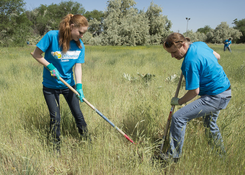 Rick Egan  |  The Salt Lake Tribune  Smith's employees Angela Ziemke (left) and Renate Stapley (right) work with other Smith's Food & Drug employee, as they clean up the Jordan River Parkway. Thursday, May 29,2014. The service effort is part of Smith's 100 days of service to local nonprofits.