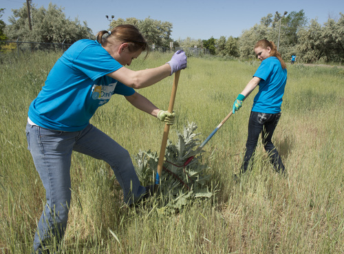 Rick Egan  |  The Salt Lake Tribune  Smith's employees Renate Stapley (left) and Angela Ziemke (right)  work with other Smith's Food & Drug employee, as they clean up the Jordan River Parkway. Thursday, May 29,2014. The service effort is part of Smith's 100 days of service to local nonprofits.
