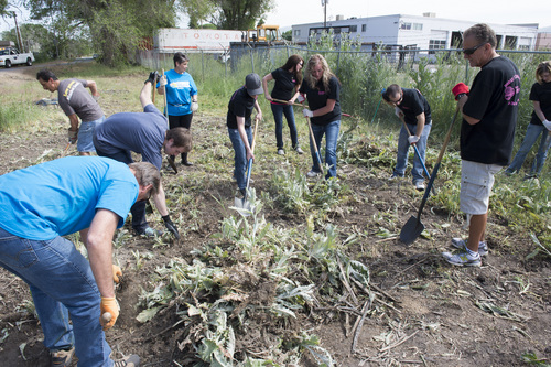 Rick Egan  |  The Salt Lake Tribune  Smith's Food & Drug employees clean up the Jordan River Parkway. Thursday, May 29,2014. The service effort is part of Smith's 100 days of service to local nonprofits.