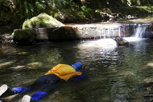 This May 2013 photo released by the California Department of Fish and Wildlife (DFW) shows a DFW diver conducting an underwater survey to count young salmon and steelhead fish in a tributary to the South Fork Eel River in Humboldt County, Calif. Some drought-stricken rivers and streams in Northern California's coastal forests are being polluted and sucked dry by water-guzzling medical marijuana farms, wildlife officials say _ an issue that has spurred at least one county to try to outlaw personal grows. (AP Photo/California Department of Fish and Wildlife)