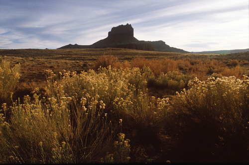 Al Hartmann  |  The Salt Lake Tribune   Rabbit brush blooms by Wild Horse Butte near Goblin Valley  The area is within the boundary of a proposed state park, basically a massive expansion of Goblin Valley to cover the southeast fringes of the San Rafael Reef.