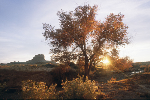 Al Hartmann  |  The Salt Lake Tribune   Sun sets behind Cottonwood tree near Wild Horse Butte near Goblin Valley  The area is within the boundary of a proposed state park, basically a massive expansion of Goblin Valley to cover the southeast fringes of the San Rafael Reef.