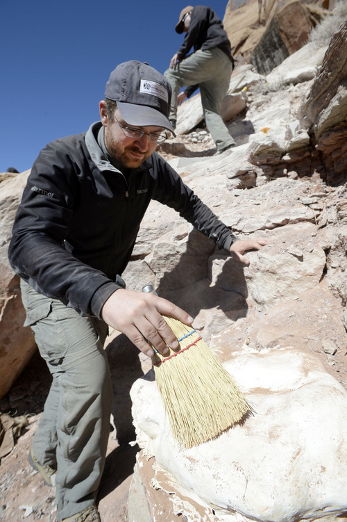 Al Hartmann  |  The Salt Lake Tribune  Natural History Museum of Utah curator of paleontology Randall Irmis sweeps off an exposed fossilized skeleton protected with a plaster of paris cast during excavation. It is an aligator-like fossil embedded in the sandstone cliffs near Canyonlands National Park the museum and volunteers are excavating.