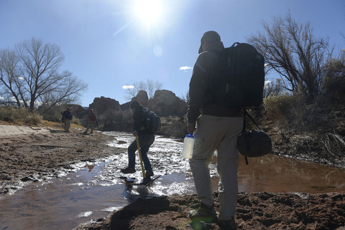Al Hartmann  |  The Salt Lake Tribune  Volunteers with the Natural History Museum of Utah ford a creek with equipment to hike to a fossil site near Canyonlands National Park.