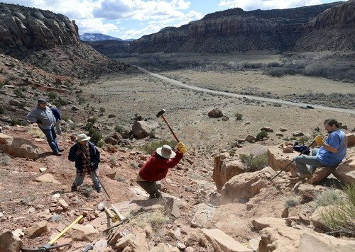 Al Hartmann  |  The Salt Lake Tribune  Volunteers with the Natural History Museum of Utah look for fossils near Canyonlands National park.