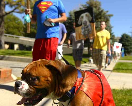 "Leah Hogsten  |  The Salt Lake Tribune Lex Luther, a boxer, and his owner Emilio ""Superman"" Lobos join the picket line as they circle the block. Hundreds of supporters of Sean Kendall and his dog, Geist, who was shot and killed in his backyard by a Salt Lake City police officer during a search for a missing child, rally to protest the officer's action, Saturday, June 28, 2014 at the SLC Police headquarters."