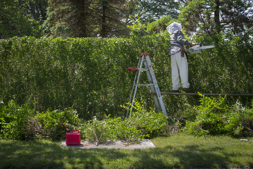 In this photo taken on Friday, July 11, 2014, a landscaper shapes hedges on private property in Southampton, N.Y. Studies show the gap separating the rich from the working poor has been ever-widening in recent years and few places provide that evidence as starkly as Long Island's Hamptons. (AP Photo/John Minchillo)
